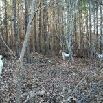 13-Dogs-in-woods-2013